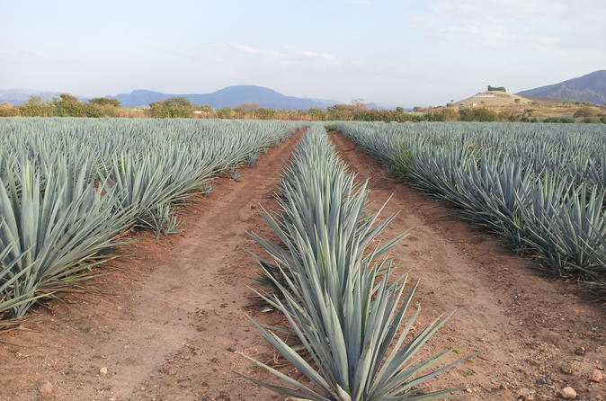 Trip to Tequila with visit to Casa Sauza Distillery