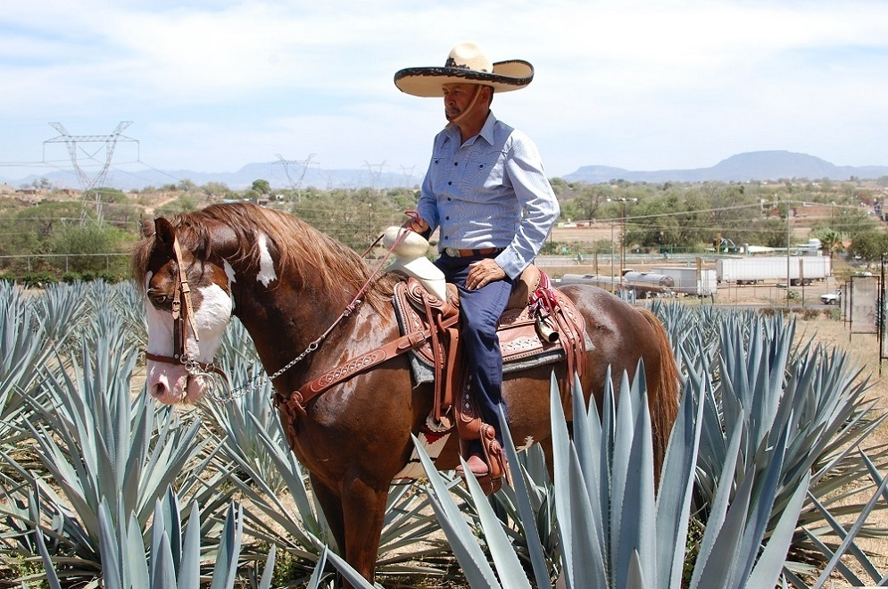 Horseback Riding, Agave Fields and Tasting